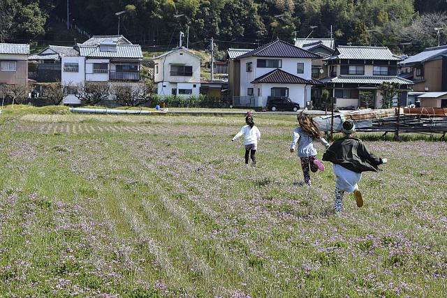 れんげ畑で�@